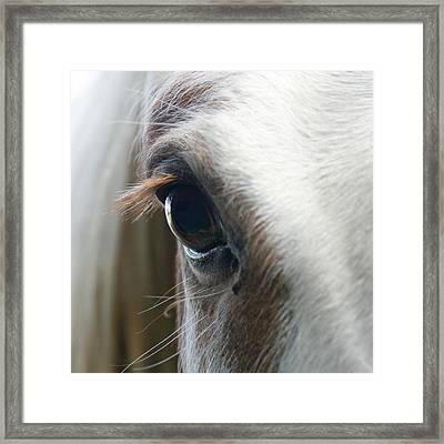 White Horse Eye Framed Print by Doug88888