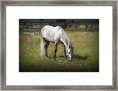 White Horse Grazing In A Pasture Framed Print