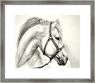 Framed Print featuring the drawing White Horse by Heidi Kriel