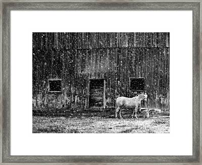 White Horse In A Snowstorm In Bw Framed Print by Maggie Terlecki