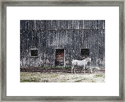 White Horse In A Snowstorm  Framed Print