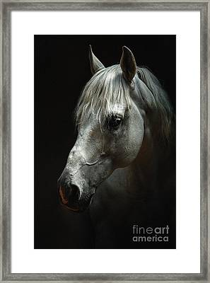 White Horse Portrait Framed Print