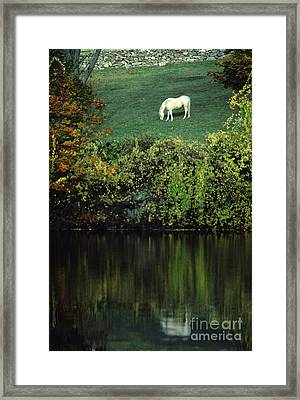White Horse Reflected In Autumn Pond Framed Print