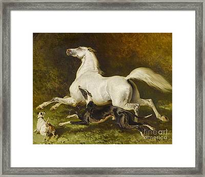 White Horse With Two Dogs Framed Print
