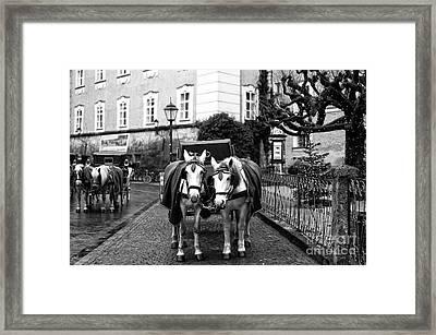 White Horses In Salzburg Framed Print by John Rizzuto