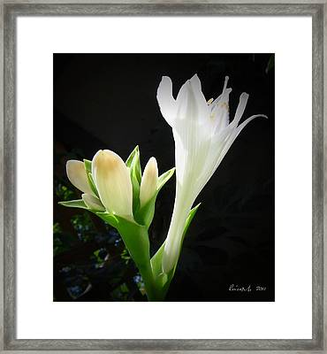 Framed Print featuring the photograph White Hostas Blooming 7 by Maciek Froncisz