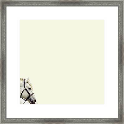 White Hourse Framed Print