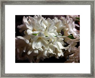 White Hyacinth Framed Print by Jasna Dragun