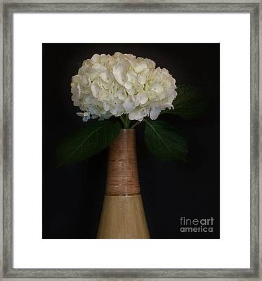 White Hydrangea In Gold Vase Framed Print by Marsha Heiken
