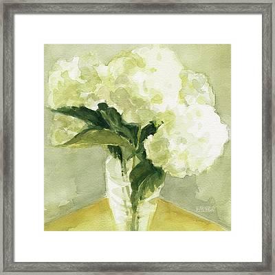 White Hydrangeas Morning Light Framed Print by Beverly Brown