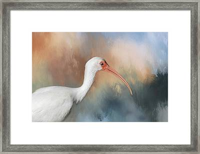 Framed Print featuring the photograph White Ibis - 2 by Kim Hojnacki