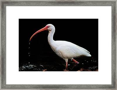 White Ibis Dripping Framed Print
