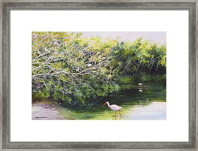 White Ibis Haven Framed Print