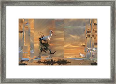 White Ibis In Abstract Framed Print
