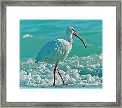 White Ibis Paradise Framed Print