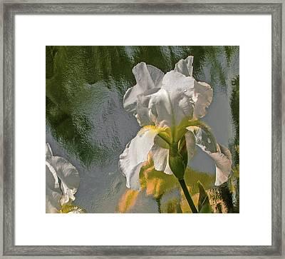 White Iris Framed Print by Don Spenner