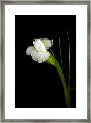 Framed Print featuring the photograph White Iris by Elsa Marie Santoro
