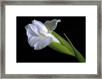 Framed Print featuring the photograph White Iris II by Elsa Marie Santoro