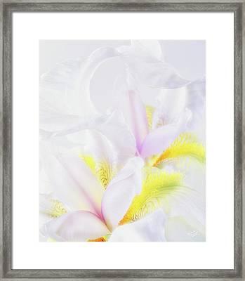 White Iris Framed Print by Leland D Howard