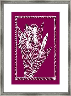 White Iris On Transparent Background Framed Print