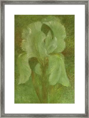 White Iris Painterly Texture Framed Print