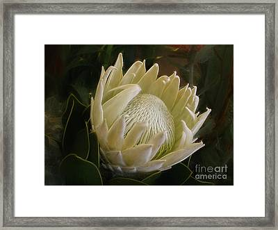 Framed Print featuring the photograph White King Protea By Kaye Menner by Kaye Menner