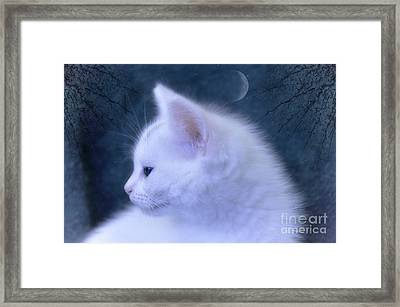 White Kitten At Night Framed Print