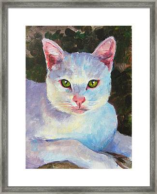 White Kitty Framed Print by Debra Jones