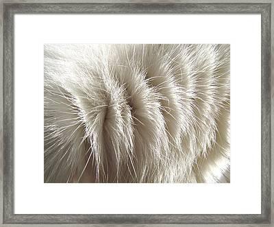 'white Kitty Fur' Framed Print by Paula  Heffel