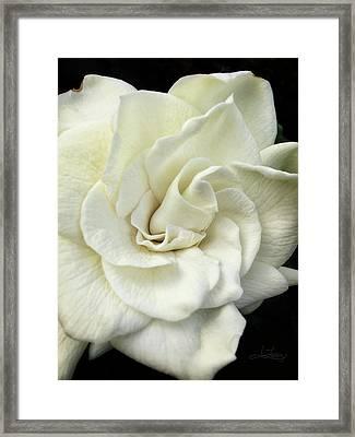 White Knight Framed Print