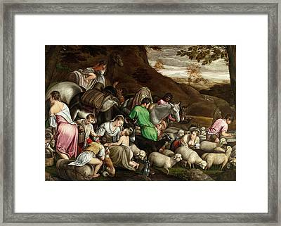 Framed Print featuring the photograph White Lambs by Munir Alawi