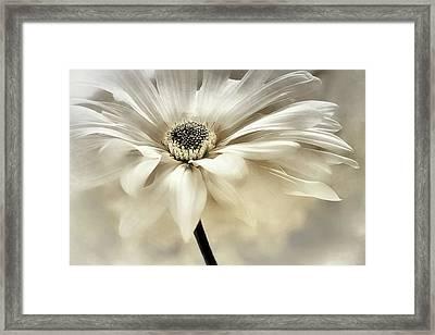 Framed Print featuring the photograph White Lights by Darlene Kwiatkowski