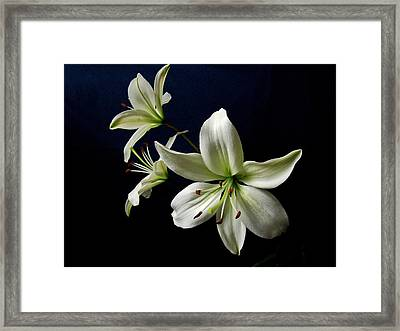 White Lilies On Blue Framed Print by Sandy Keeton