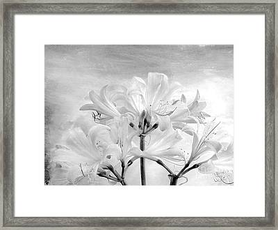 White Lillies Framed Print by Marsha Heiken