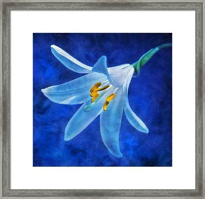 Framed Print featuring the digital art White Lilly by Ian Mitchell