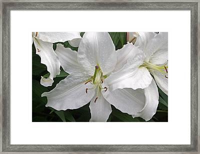 White Lily Flower Framed Print