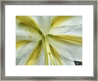 White Lily Framed Print by Beth Akerman
