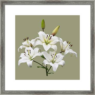 White Lilies Illustration Framed Print by Jane McIlroy