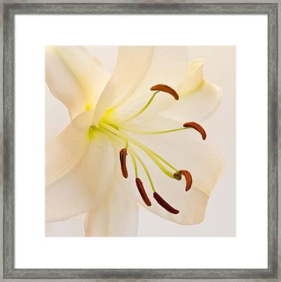 White Lily Square Version Framed Print by Bill Swindaman