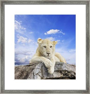 White Lion Framed Print by Anek Suwannaphoom