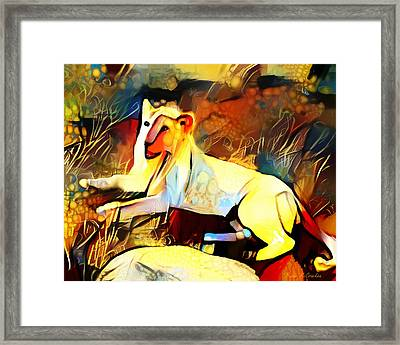 Framed Print featuring the photograph White Lioness by Pennie  McCracken