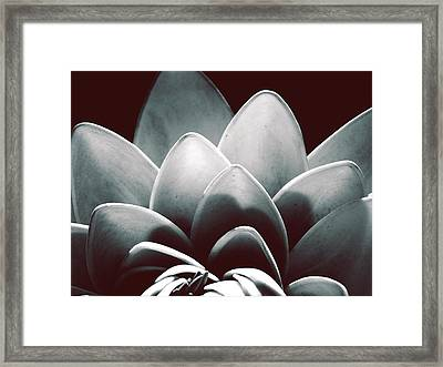 White Lotus At Dawn Framed Print