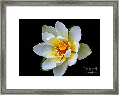 White Lotus Flower Framed Print