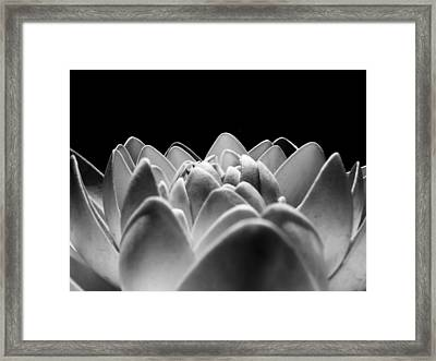 White Lotus In Night Framed Print