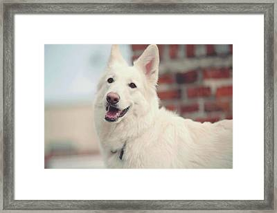 White Love Framed Print