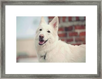 White Love Framed Print by Jenny Rainbow