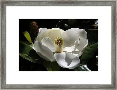 White Magnolia Flower Framed Print