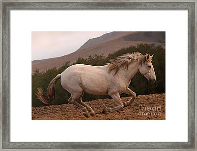 White Mare Gallops #1 -  Close Up Brighter Framed Print