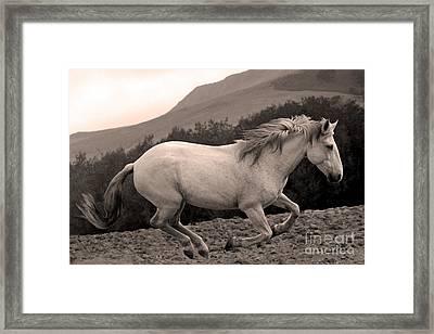 White Mare Gallops #1 -  Close Up Sepia Framed Print