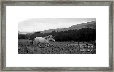 White Mare Gallops #1 - Panoramic Black And White Framed Print